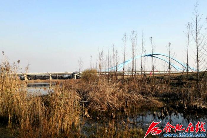 派河口左堤外侧湿地生态修复工程整改后